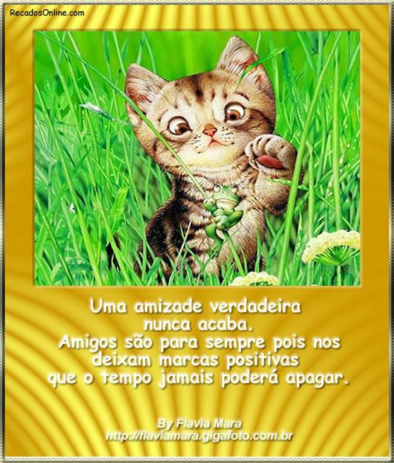 Gatinhos imagem 4