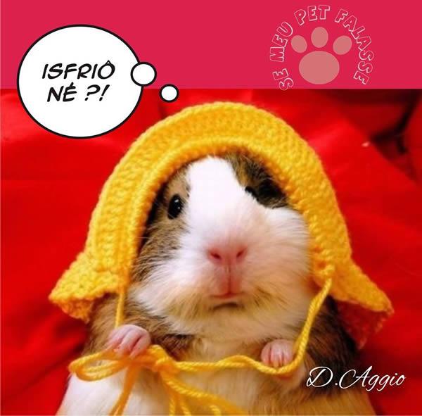 Frio Imagem 5