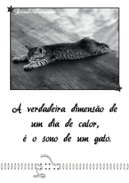 A verdadeira dimensão de um dia de calor, é o sono de um gato.