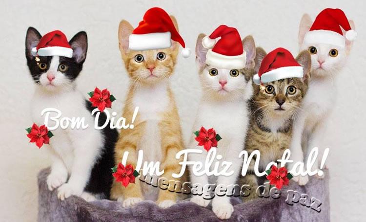 Bom Dia Natal Imagem 2