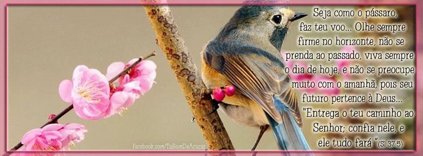 Seja como o pássaro, faz teu voo... Olhe sempre forme no horizonte, não se prenda ao passado, viva sempre o dia de hoje, e não se preocupe muito...