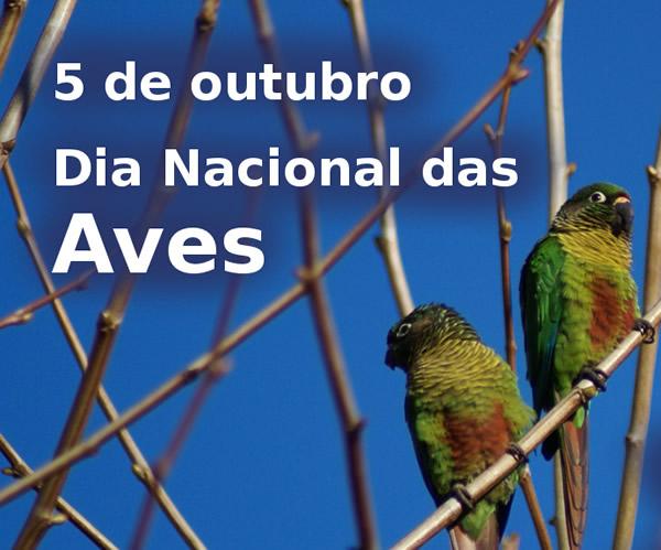 Dia das Aves Imagem 1