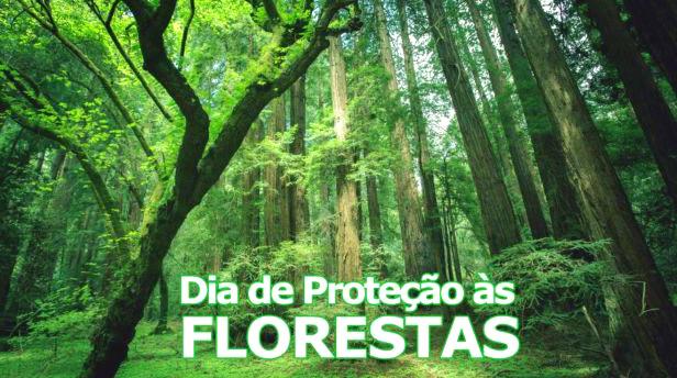 Dia de Proteção às Florestas imagem 4