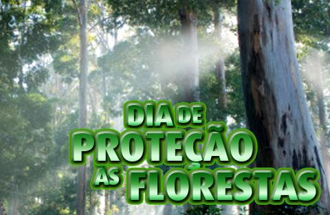 Dia de Proteção às Florestas Imagem 6