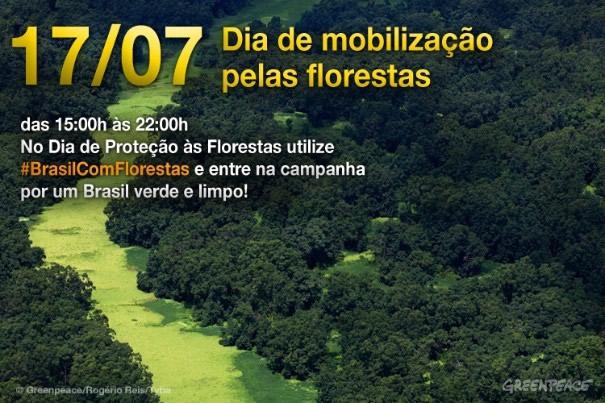 Dia de Proteção às Florestas Imagem 7