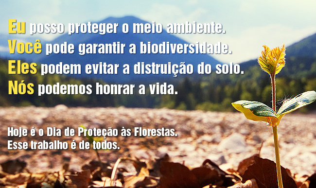 Dia de Proteção às Florestas imagem 9