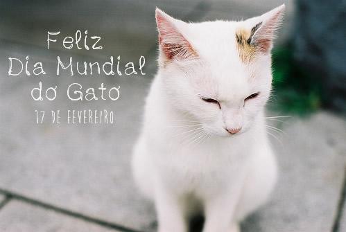 Dia Mundial do Gato Imagem 4