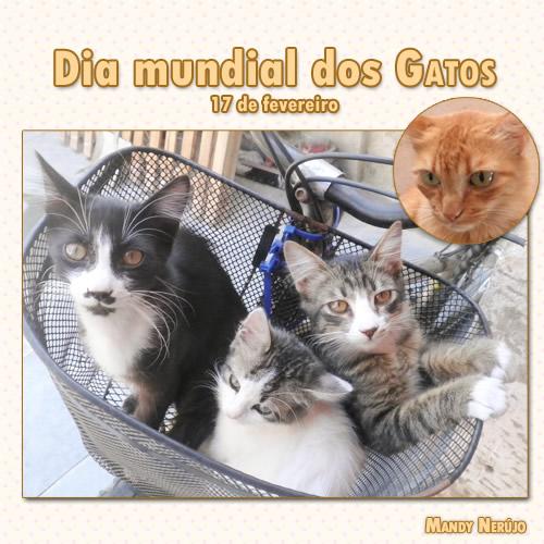 Dia Mundial do Gato Imagem 5