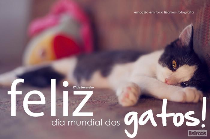 Dia Mundial do Gato Imagem 6