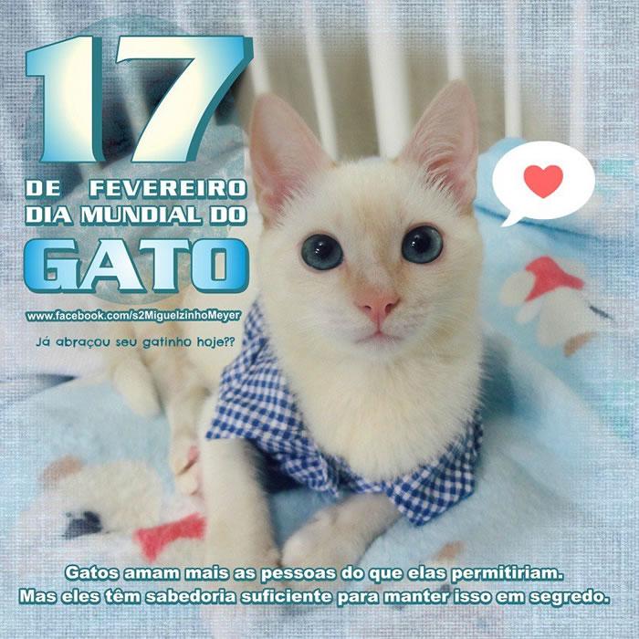 Dia Mundial do Gato Imagem 8