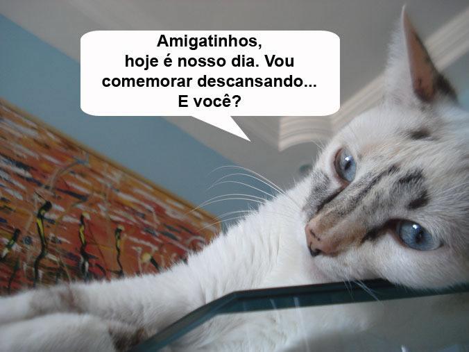 Dia Mundial do Gato Imagem 10